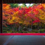 京都のお寺でヨガ体験!初心者から経験者まで参加できる癒しの時間