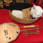 【京都】猫をご本尊とした「猫猫寺(にゃんにゃんじ)」は、猫好きにピッタリなテーマパーク