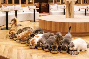 【2020年最新】京都のおすすめ猫カフェ10選!オシャレで可愛い店内を写真で紹介