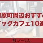 【完全版】京都・河原町周辺のおすすめドッグカフェ10選!営業時間や特徴などまとめ!