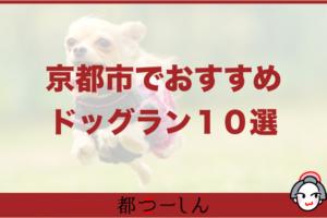 【保存版】京都のおすすめドッグラン10選!営業時間や特徴まとめ!