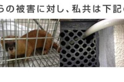 【完全版】京都でおすすめの害獣駆除10選!見積もりや特徴などのまとめ!