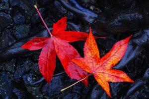 【2021年最新版】京都のおすすめ紅葉ライトアップ名所13選!最新情報と見頃まとめ